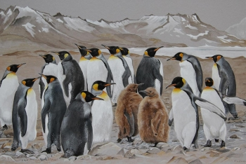 King-Penguins-at-Fortuna-Bay